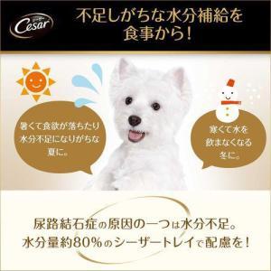 シーザー11歳からの吟選ビーフ  ( 100g*24コセット )/ シーザー(ドッグフード)(Cesar)|soukai|05