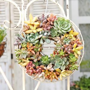 多肉植物やセダム等をたっぷり使ったリースの寄せ植えSサイズです。 壁に吊って飾ったり台に置いて飾った...