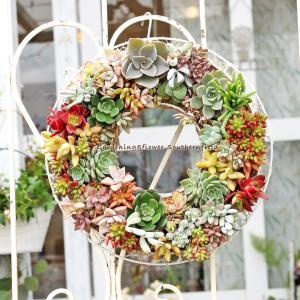 20個以上の多肉植物やセダム等をたっぷり使ったリースの寄せ植えMサイズです。 壁に吊って飾ったり台に...