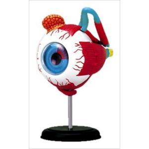 アオシマ 立体パズル 4D VISION 人体解剖 眼球解剖モデル star-gate