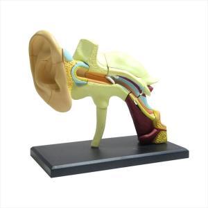 アオシマ 立体パズル 4D VISION 人体解剖 耳解剖モデル star-gate