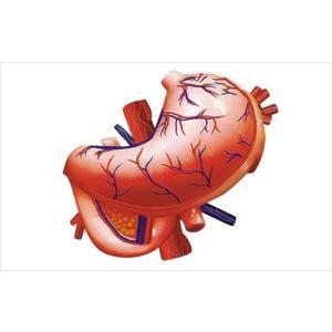 アオシマ 立体パズル 4D VISION 人体解剖 胃解剖モデル star-gate