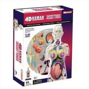 アオシマ 立体パズル 4D VISION 人体解剖 妊婦解剖スケルトンモデル star-gate