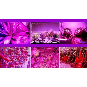 LED植物育成 植物育成ライト 14W 225...の詳細画像5