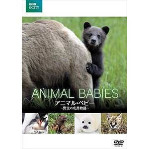 BBC earth アニマル・ベビー 〜野生の成長物語〜 [DVD]|starclub