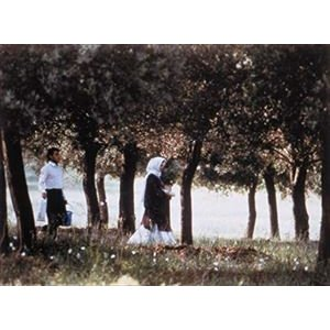 オリーブの林をぬけて ニューマスター版 Blu-ray [Blu-ray] starclub