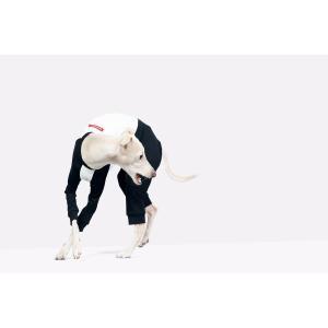 vemvem ヴェムヴェム イタリアングレーハウンド・ウィペット専用Tシャツ/ バレエ:スリムヒート/ラグランTシャツ サイズ S/M/L/XL starry 03
