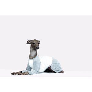 vemvem ヴェムヴェム イタリアングレーハウンド・ウィペット専用Tシャツ/ バレエ:スリムヒート/ラグランTシャツ グレー サイズ S/M/L/XL|starry|02