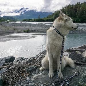 犬 リード  ウルフギャング WOLFGANG LokiWolf Mサイズ 全長 122cm|starry|03