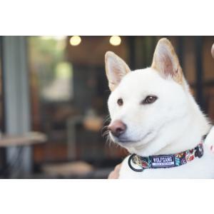犬 首輪 ウルフギャング WOLFGANG LosMuertos COLLAR Sサイズ アメリカンメイド ネコポス便対応|starry|05