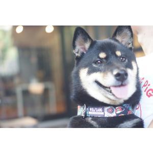 犬 首輪 ウルフギャング WOLFGANG LosMuertos COLLAR Sサイズ アメリカンメイド ネコポス便対応|starry|06