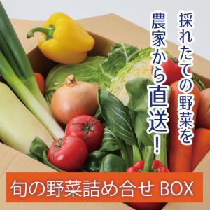 旬の野菜BOX  野菜 野菜ボックス 旬 農家直送 健康 農家 シュリセルファーム