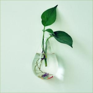 ノーブランド品 ガラス製 壁掛け式 ハンギング 花瓶 フラワーベース しずく型 (クリア)|stk-shop