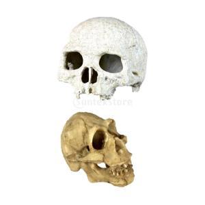 GRALARA2個入り お買い得 爬虫類 隠れ家 テラリウム 造園 人間の頭蓋骨 DIY 水槽の装飾|stk-shop