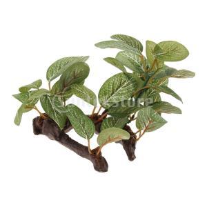 説明:生き生きとした植物の見通しは、ペットのストレスを和らげるのに役立ちます。爬虫類や両生類のための...
