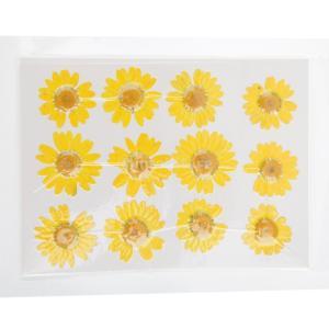 ノーブランド品 葉 押し花 植物 装飾品 カード DIY 手芸用 スクラップブッキング 手作り 全4パタン選べる - #2 stk-shop