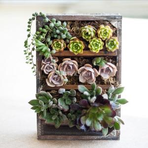 鉢 花 多肉植物 プランター 栽培用 自然環境 ガーデン 飾り 木製 インテリア