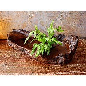 木製バスケット 古木 花器 ハンドメイド カントリー アジアン 和風|store-monsoon