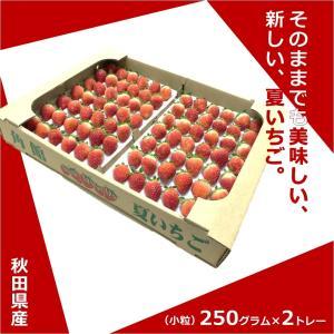 ◆「なつあかり」とは?  今まで輸入品や加工用品種しか無かった日本の夏に、 おいしいイチゴを取り戻す...
