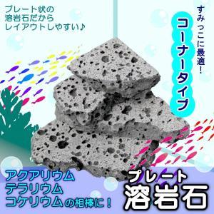 アクアリウム 石 溶岩石 レイアウト コーナー ボルケーノロック 2kg