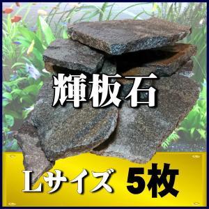 アクアリウム 石 輝板石 Lサイズ 5枚 国産品