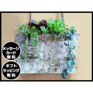 多肉植物 誕生日 寄せ植え 開店祝 観葉植物 自宅 セダム お届け日時指定可能【多肉植物の寄せ植え・...
