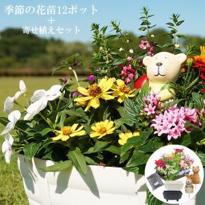 季節の花苗(春)12ポット+寄せ植えセット 送料無料 6種類(各2ポット)の花苗で寄せ植えを