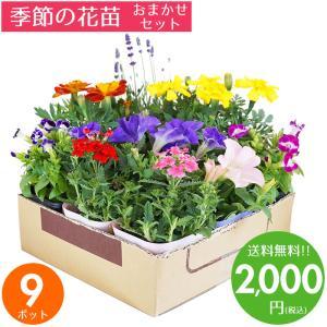 花苗 秋 セット ガーデニングに最適です♪季節の花苗おまかせ9ポット 送料無料 沖縄・離島を除く