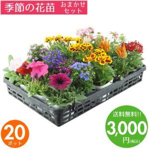 花苗 秋 セット ガーデニングに最適です♪季節の花苗おまかせ20ポット 送料無料 沖縄・離島を除く