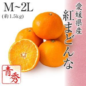 (12月上旬より発送) お歳暮 ギフト みかん 送料無料 愛媛県産 紅まどんな M〜2L 約1.5kg 青秀品 化粧箱入り|suikinkarou