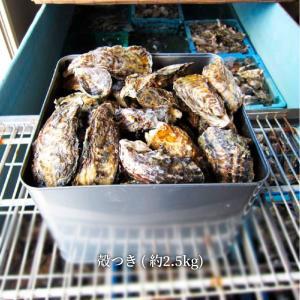 12月上旬ごろより順次発送 ギフト 牡蠣 生牡蠣 瀬戸内市邑久町虫明産 殻付き牡蠣 約2.5kg 約30個 産地直送 送料無料 カキ かき お歳暮|suikinkarou