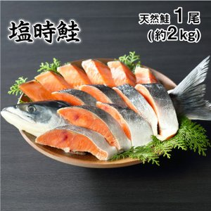 塩時鮭 天然物 1尾/約2kg 約10人前  送料無料年末年始特集 海産物