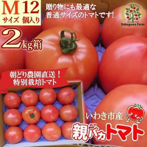[予約]親バカトマト約2kg Mサイズ 12個入り いわき市産 11月下旬〜発送|suketoma