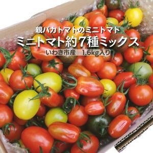 [予約]親バカトマトのミニトマト 約7種ミックス1.8kg入り いわき市産  11月下旬〜発送|suketoma