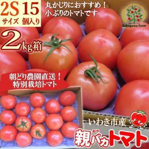 [予約]親バカトマト 約2kg 2Sサイズ 15個入り いわき市産 11月下旬〜発送|suketoma