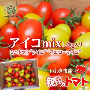 [予約]アイコミックス1.2kg入り 親バカトマトのミニトマト いわき市産  11月下旬〜発送 |suketoma