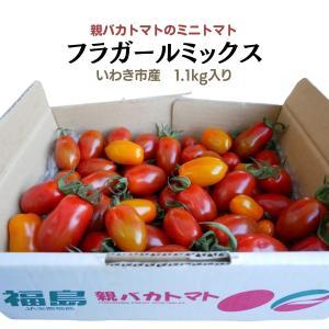 [予約]フラガールミックス1.2kg入り 親バカトマトのミニトマト いわき市産  11月下旬〜発送 |suketoma