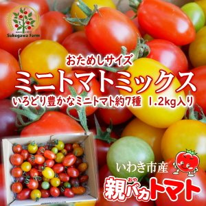 [予約]親バカトマトのミニトマト約7種ミックス 1.2kg いわき市産 11月下旬〜発送|suketoma