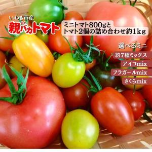 [予約]親バカトマトとミニトマトの詰め合わせ 約1kg  いわき市産 選べるミニ 11月下旬〜発送|suketoma