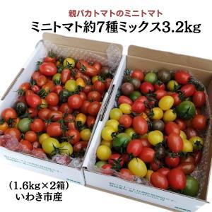 [予約]親バカトマトのミニトマト約7種ミックス 3.6kg いわき市産 11月下旬〜発送|suketoma