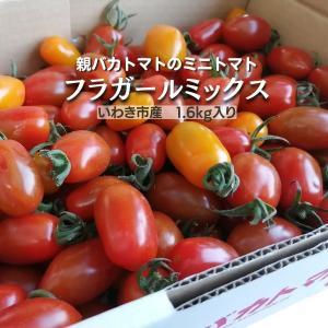 [予約]フラガールミックス1.8kg入り 親バカトマトのミニトマト いわき市産  11月下旬〜発送 |suketoma