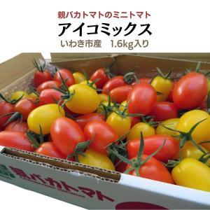 [予約]アイコミックス1.8kg入り 親バカトマトのミニトマト  11月下旬〜発送 いわき市産 |suketoma