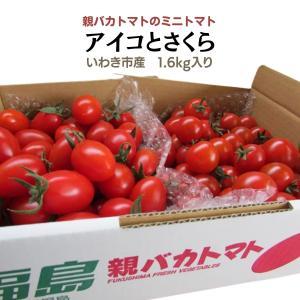 [予約]アイコとさくら1.8kg入り 親バカトマトのミニトマト いわき市産  11月下旬〜発送|suketoma