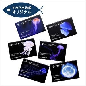 すみだ水族館 クラゲマグネット 全6種(アカクラゲ / アマクサクラゲ / ギヤマンクラゲ / タコクラゲ / ミズクラゲ / ブルージェリーフィッシュ)|sumida-aquarium