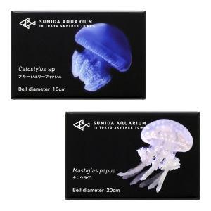 すみだ水族館 クラゲマグネット 全6種(アカクラゲ / アマクサクラゲ / ギヤマンクラゲ / タコクラゲ / ミズクラゲ / ブルージェリーフィッシュ)|sumida-aquarium|03