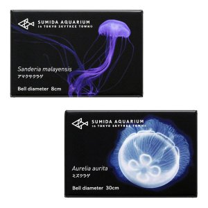 すみだ水族館 クラゲマグネット 全6種(アカクラゲ / アマクサクラゲ / ギヤマンクラゲ / タコクラゲ / ミズクラゲ / ブルージェリーフィッシュ)|sumida-aquarium|05