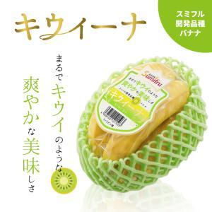 スミフル開発品種 キウイーナ 3パック 数量限定販売 まるでキウイのような爽やかな美味しさ 高級 最高級 バナナ お中元 プレゼント 【8/8または8/15発送】