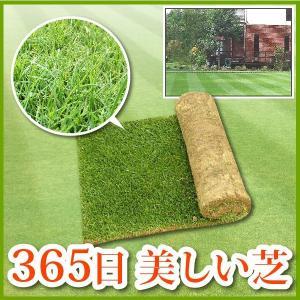 芝生 天然芝 三種混合ロール巻芝 (芝生 通販)|sun-wa|02