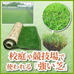 芝生 天然芝 ティフトン芝 ロール巻芝 (芝生 通販)|sun-wa|02