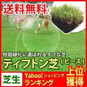 芝生 天然芝 ティフトン芝 ピース 1ケース50個入 (芝生 通販) sun-wa